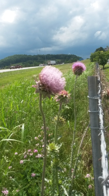 Wildflowers on the highway - photography